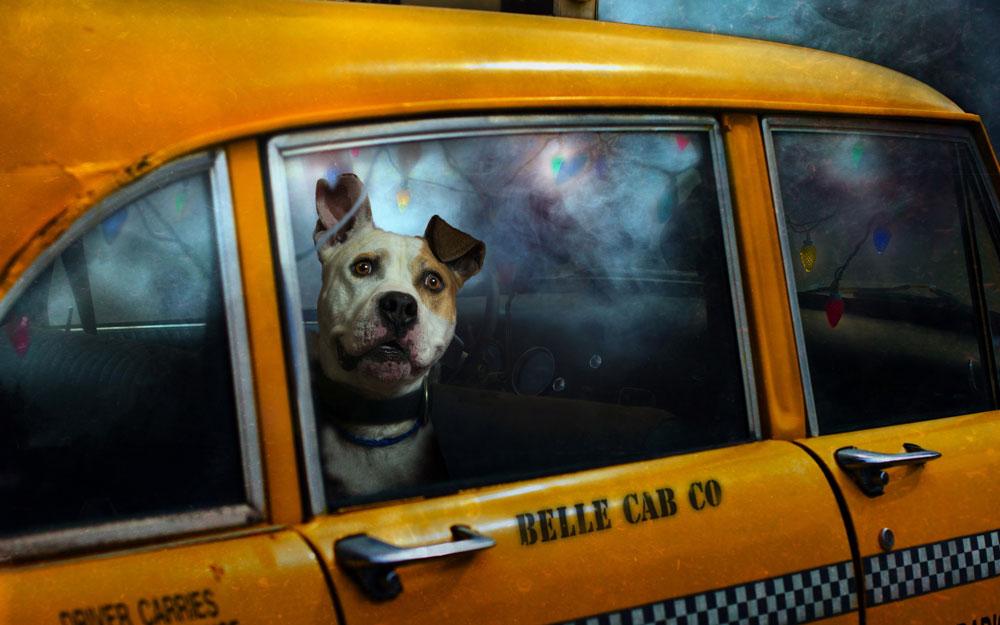 такси для собак