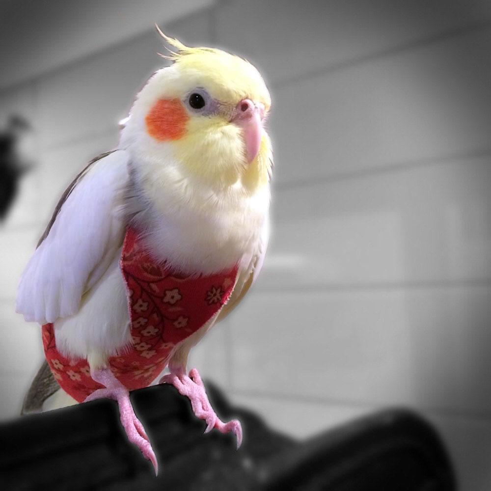 Подгузники для птиц