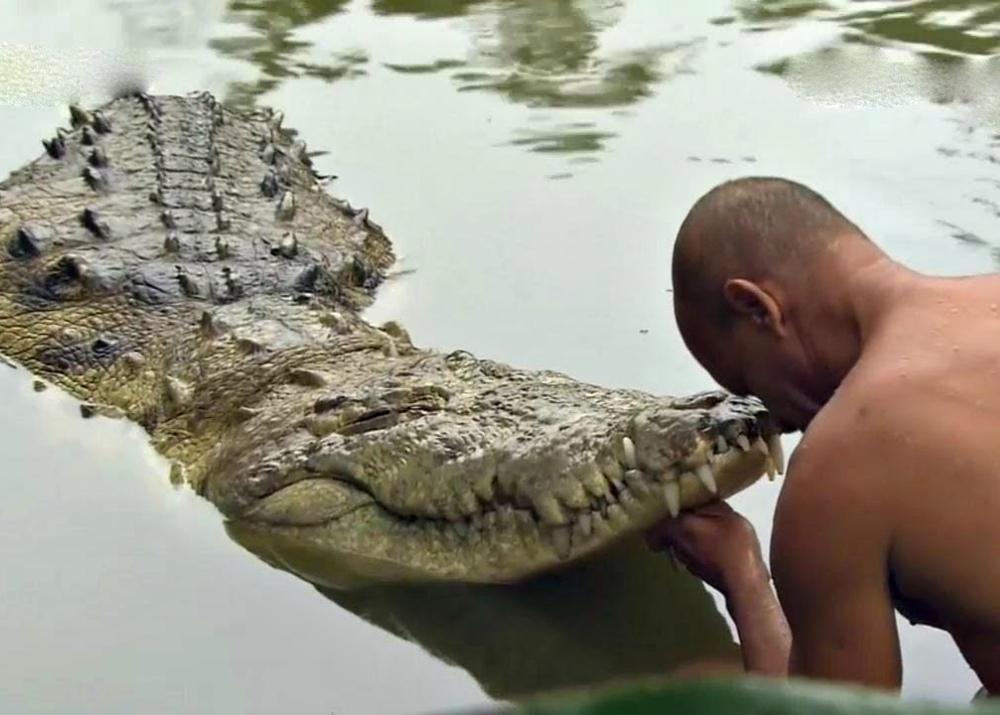 Смертельный аттракцион с крокодилом