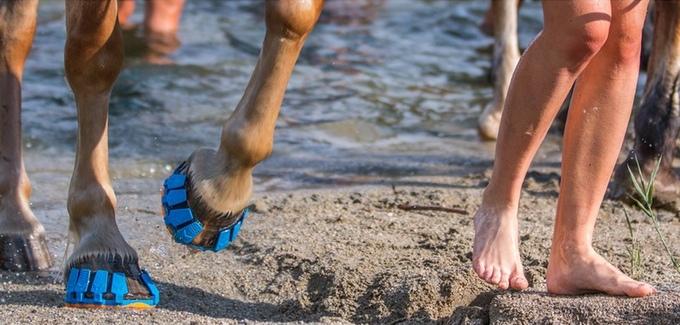 Бизнес-идея: обувь для лошадей