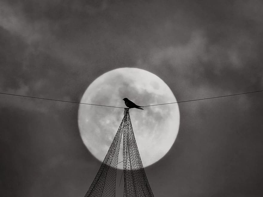Тренд на бёрдвотчинг: наблюдение за птицами как бизнес