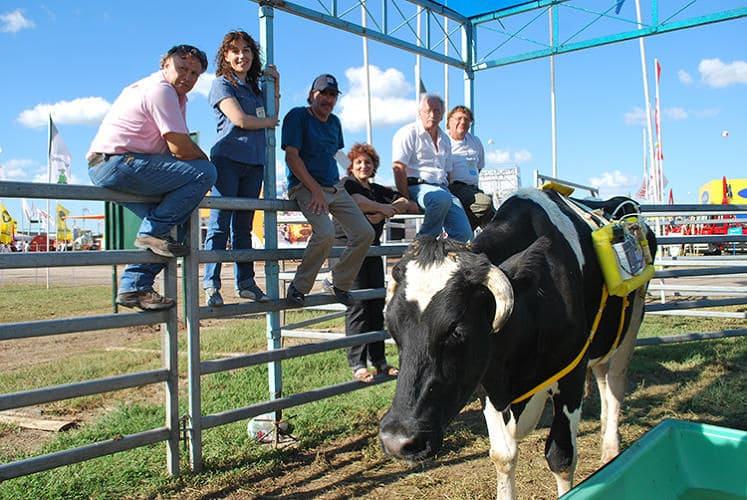 Необычные экологические и этические инновации в скотоводстве: 8 идей