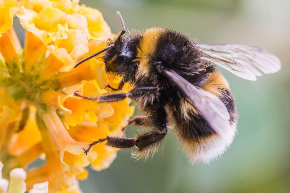 Бизнес-идея: городской пчелиный улей