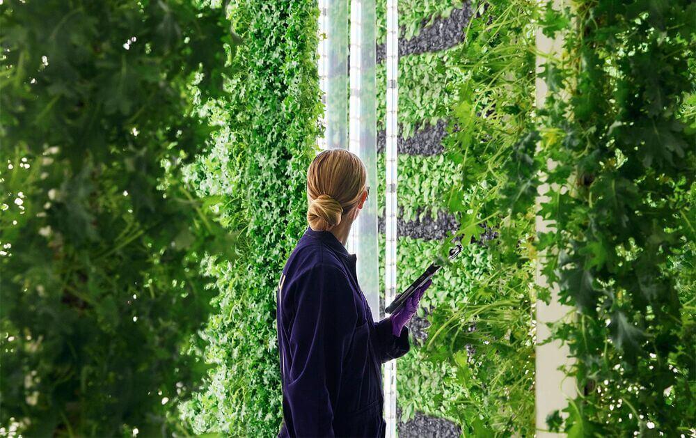 Овощеводство и тепличный бизнес: 10 бизнес-идей