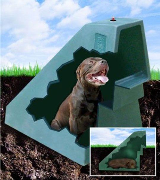 Бизнес-идея: подземные будки для собак