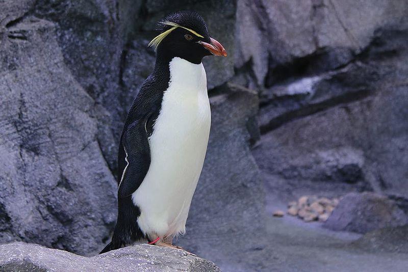 Бизнес-идея: пингвинарий