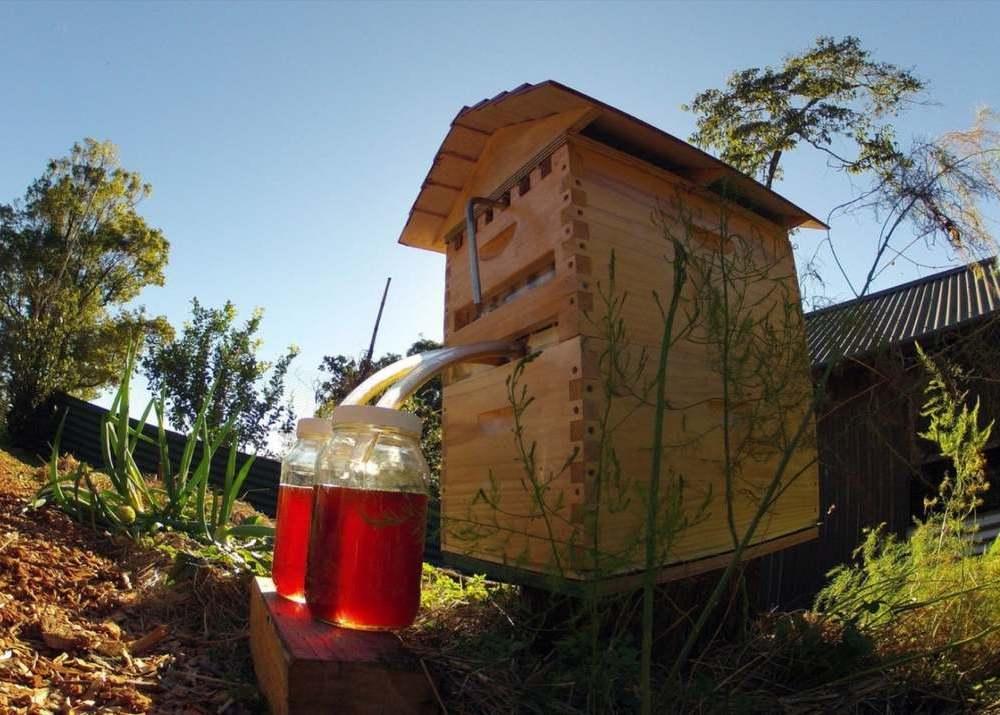 Бизнес-идея: инновационные ульи Honey Flow