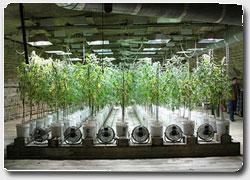 Бизнес идея №4717. Вертикальные органические фермы вместо бомбоубежищ