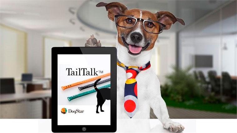 Бизнес-идея: девайс, носимый на собачьем хвосте: трекер собачьих эмоций