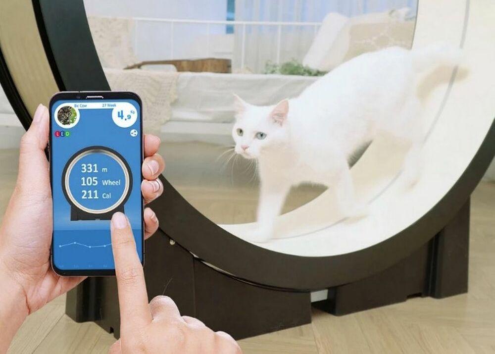 """Тренд """"Девайсы для домашних питомцев"""": AI и животные"""