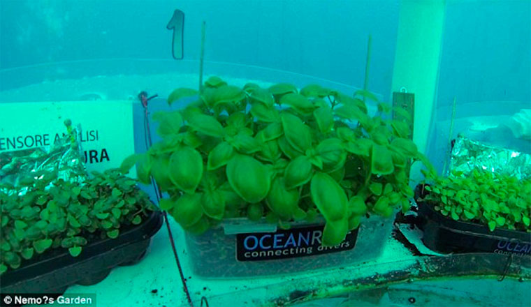 Бизнес идея №5478. Подводные огороды. Аквалангисты выращивают урожай в воздушных пузырях