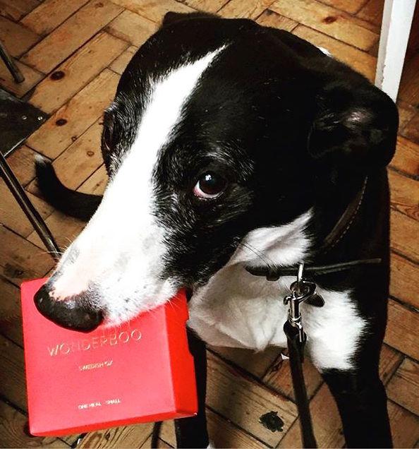 Рекламная идея: премиум-еда для собак