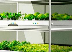 Корейский нано-сад – огород на вашей кухне