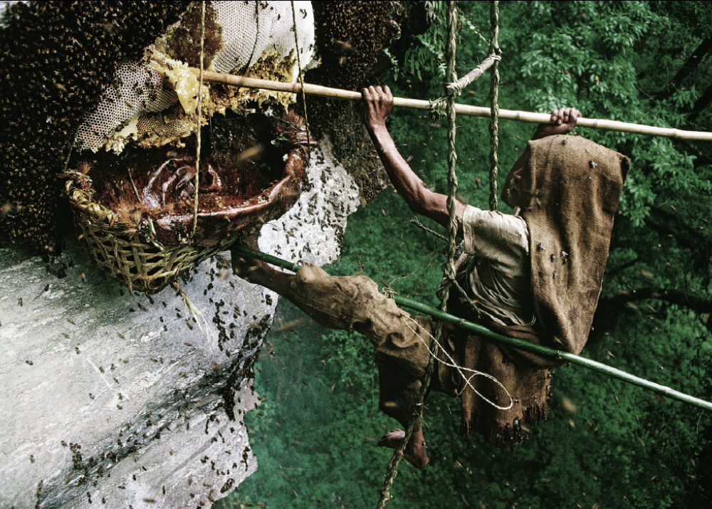 Экстремальный бизнес: 10 примеров бизнеса с опасными животными