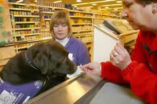 идея бизнеса: собаки-партнеры