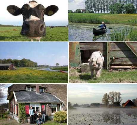 Необычная идея бизнеса: ферма-отель