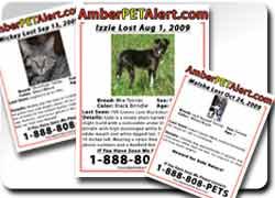 сервисная идея: Сервисы помощи в поиске пропавшего животного