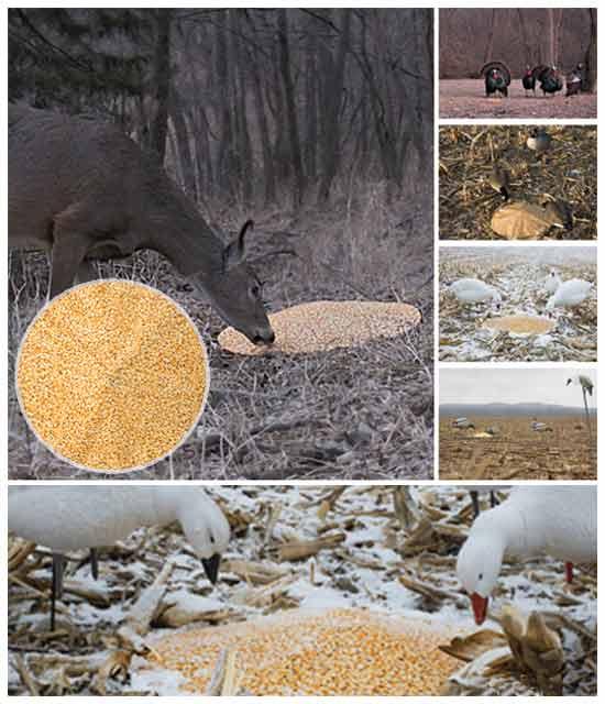охотничья идея: Имитатор зерна для охотников