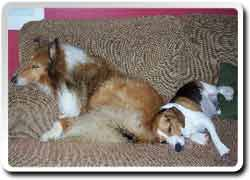 Buddy�s Sleepovers and Playdates - ������ ������ �� ������ ��������� ����� ��� �������� ��������