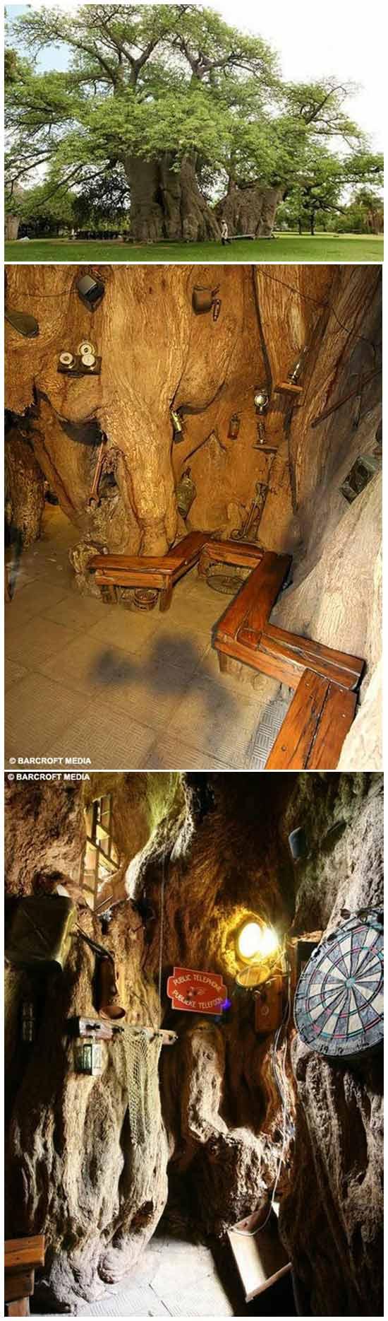 Необычные рестораны: Бар в дупле дерева