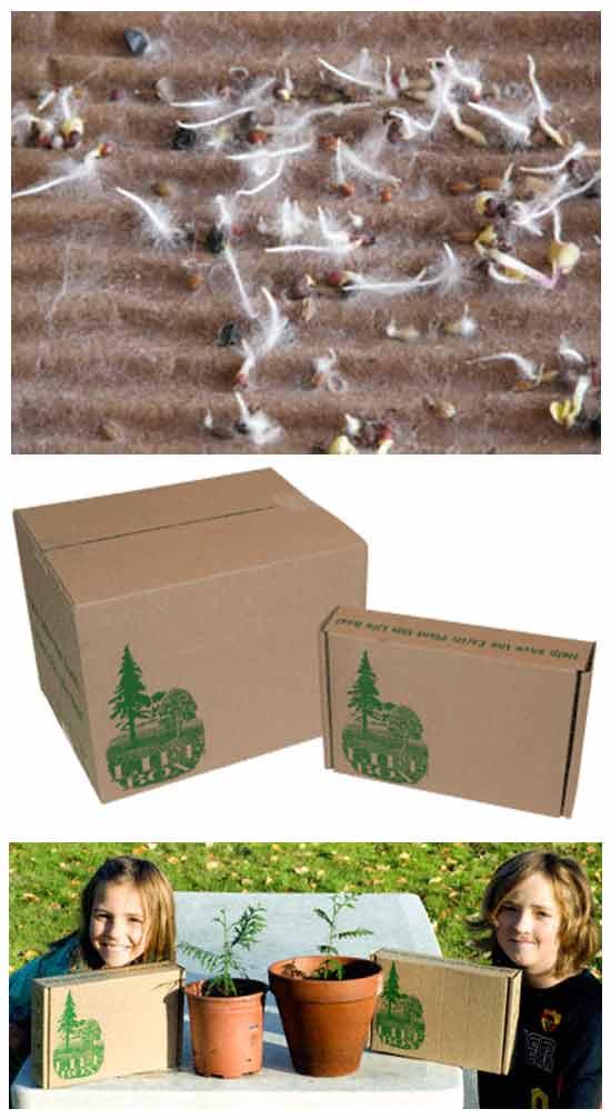 «Живые» упаковочные коробки