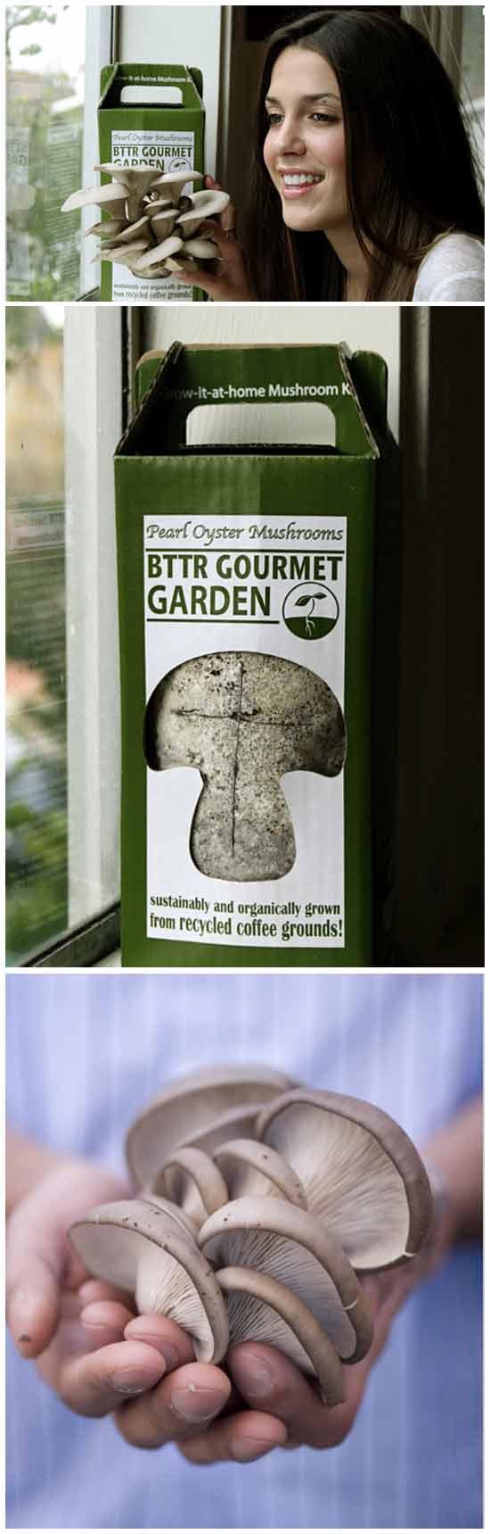 Набор для выращивания грибов на кофейной гуще