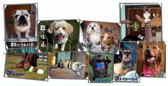 Идеи бизнеса на домашних животных: Оздоровительный  лагерь для домашних питомцев