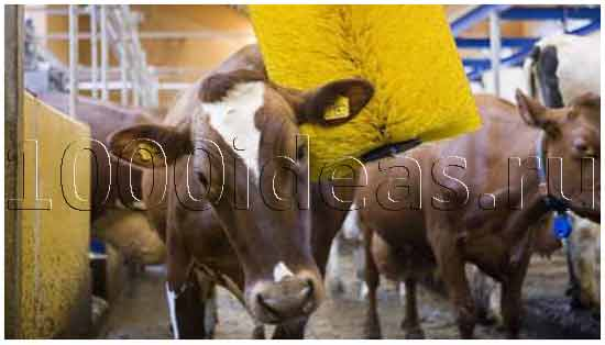 Массажер для коров
