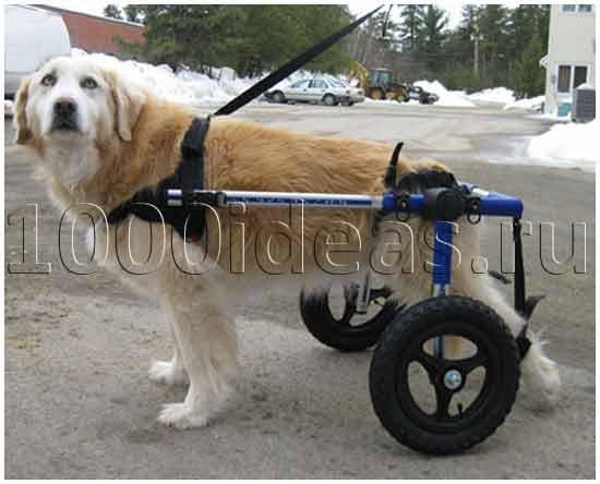 Костыли для собак