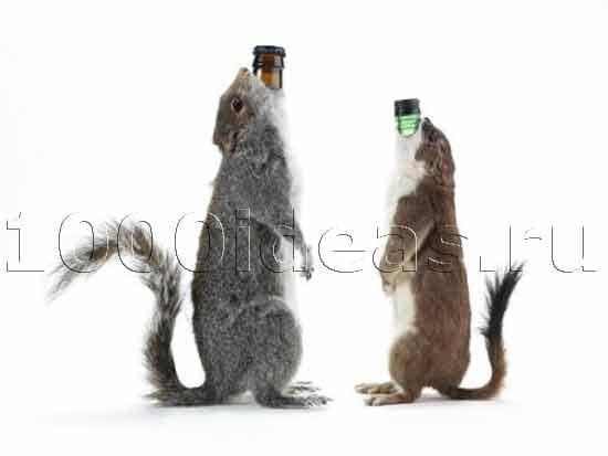 Пиво с 55% алкоголя в бутылках из чучел животных
