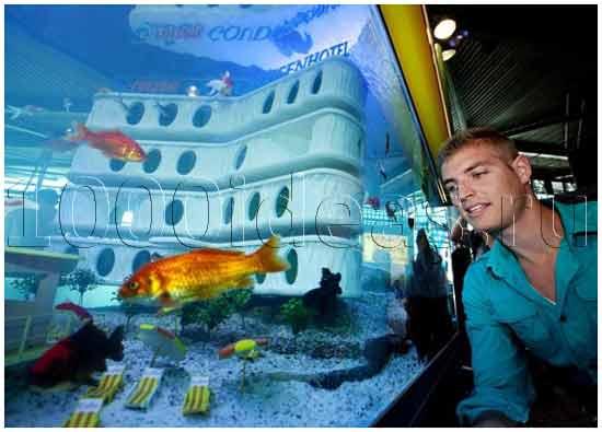 Отель для золотых рыбок