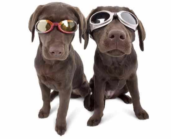 Идея № 2058. Очки для собак