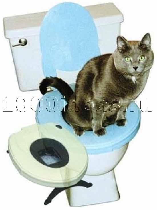 Идея № 2052. Сиденье на унитаз для котов