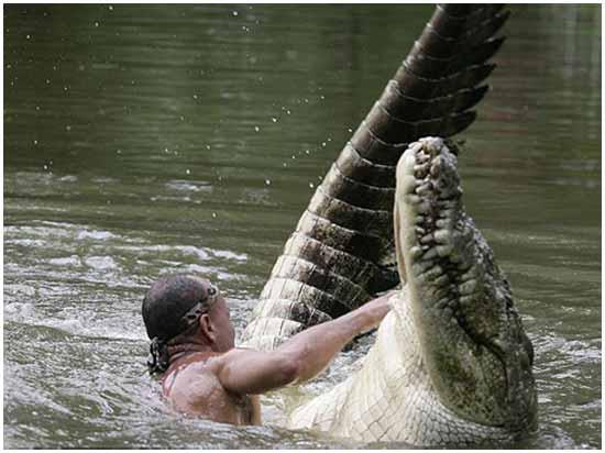 Идея № 2103. Экстремальные развлечения в Коста Рики: смертельный аттракцион с крокодилом