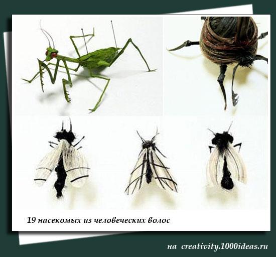 19 насекомых из человеческих волос