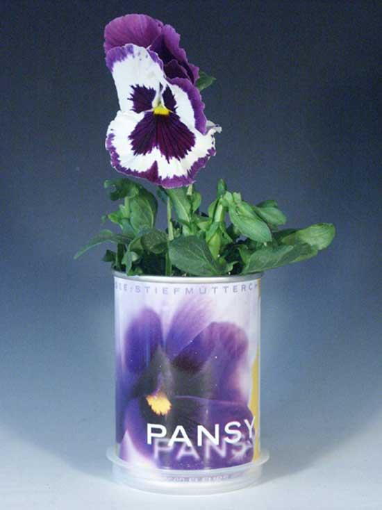 Растения в консервных банках отличное решение для заядлых растениеманов.
