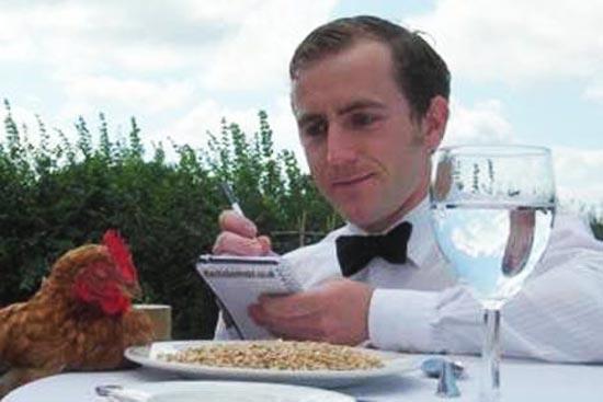 В  Англии, Хельстоне открылся VIP-отель для кур!