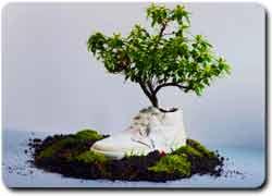 Экологичная обувь