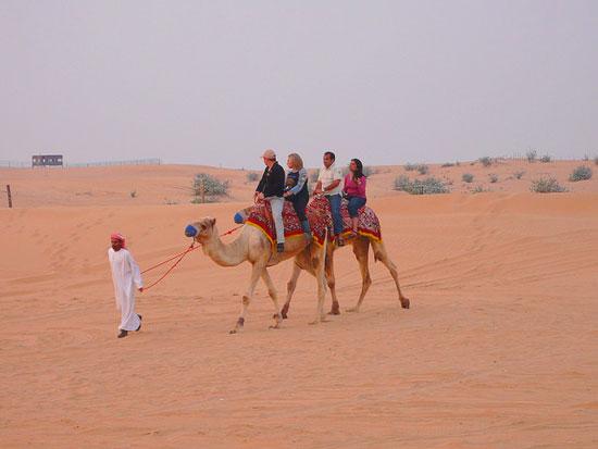 В Америке была найдена экзотическая альтернатива конным прогулкам – верблюжьи прогулки.