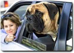 Pet taxi - Такси для домашних животных