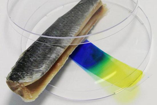 Германские исследователи из  физического института имена Йозефа Фраунгофера (Joseph Fraunhofer) изобрели индикатор свежести мяса, который представляет собой ленту-детектор для определения степени свежести мяса.