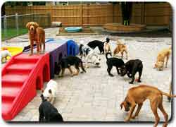 Детская площадка для собак Playground Pups