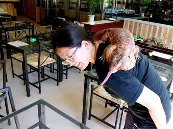 В Японии открылось необычное кафе Yokohama Subtropical Tea, в котором живут рептилии.