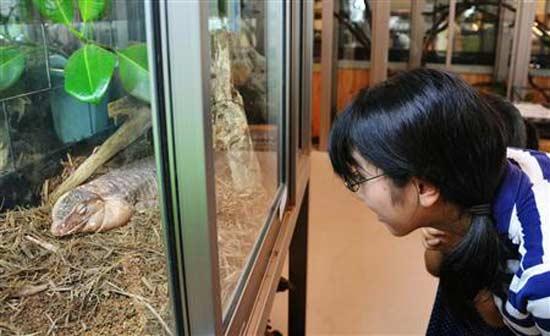 Автор бизнес-идеи и уникальной концепции кафе с рептилиями 42-летний Атсуши Нагана (Atsushi Nagan).