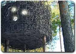 Бизнес идея № 2077. Отель-гнездо на дереве