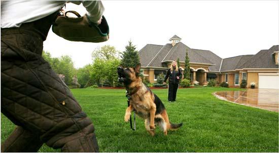 Инструктор Харрисон Прадер  (Harrison Prather) организовал бизнес на дрессировке и продаже собак в качестве охраны, который  стал процветать благодаря росту обеспеченных американцев, которые больше всего ценили собственную безопасность и статус.