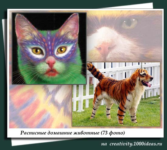 Расписные домашние животные (73 фото)