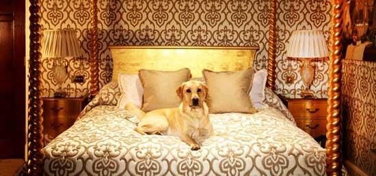 Туристическое агентство Chien Bleu позиционирует себя как единственное в мире агентство путешествий для собак.
