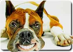 Мода на пластическую хирургию для домашних животных пришла из Америки.