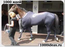спортивный костюм для лошадей